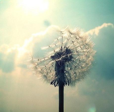 林徽因(林徽音)名言被月亮代表我的心收藏到人生感悟