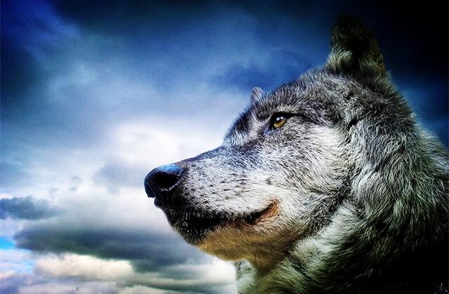 狼的精神格言壁纸
