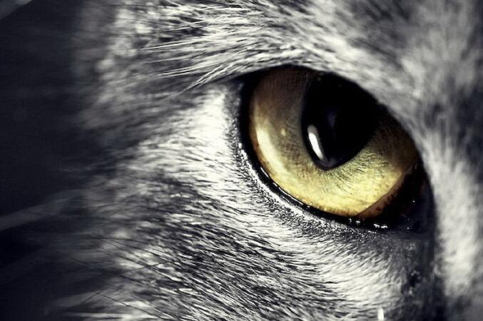 狼群逆袭-由春节《狼图腾》热映看狼性思维的积极意义