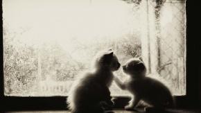 毕淑敏名言被明明就收藏到关于爱情的名言