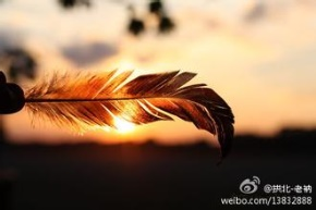 桐华(任海燕)名言被小小说说收藏到小说欣赏
