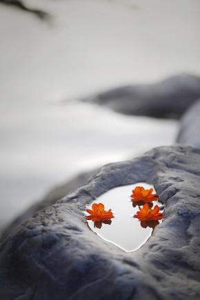 徐志摩(徐章垿)名言被五松无痕收藏到恋之风景