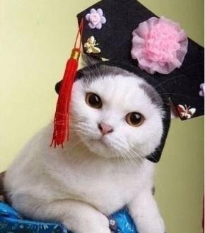 老罗(罗永浩)名言被夜猫子收藏到生活