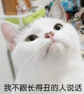 亦舒(倪亦舒)名言被小狗叫豆豆收藏到简单设计