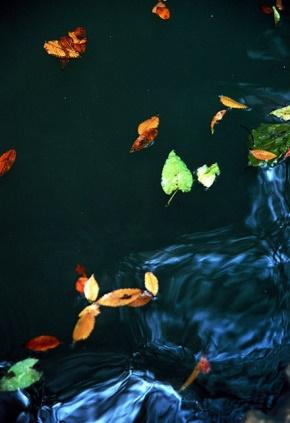 当年明月(石悦)名言被雪鸟收藏到感悟的幸福