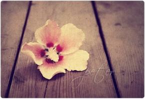 王静安(王国维)名言被花开自有花落时收藏到人生哲理