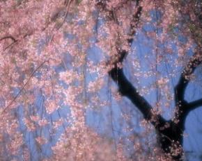 笛安名言被两个月亮收藏到风景有佳文