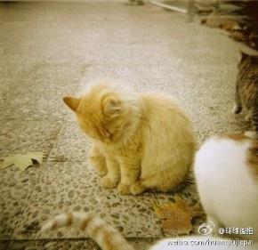 冯巩(冯明光)名言被非主流个性收藏到人生语录