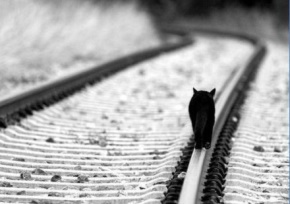 笛安名言被耗尽热情收藏到小说排行
