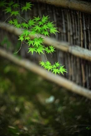 张方宇名言被0度爱收藏到理解人生
