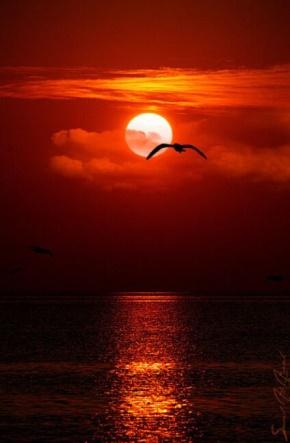杜甫名言被放飞的风筝。收藏到美不胜收