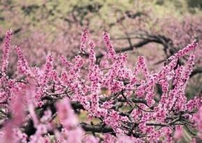 白居易名言被花开自有花落时收藏到留在心底的美