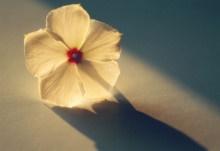 安知晓(蔡汝雅)名言被勇气果子收藏到伤感的美文