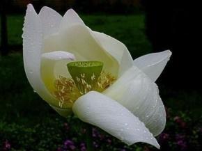 林夕(梁伟文)名言被空锁满庭花雨收藏到感悟的幸福