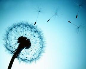 落落(赵佳蓉)名言被白玫瑰收藏到生活有感