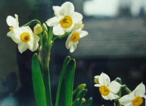 范晔名言被以父亲之名收藏到农历十二月份