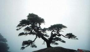 孟子(孟轲)名言被莫莫茶馆收藏到理想