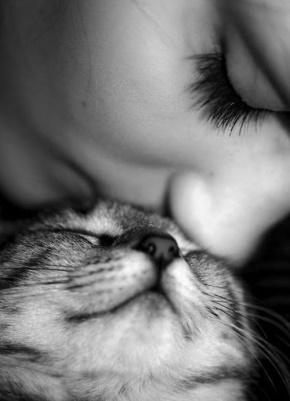 王菲名言被夜猫子收藏到恋宠脾气