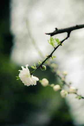 谷德昭名言被花开自有花落时收藏到人生感悟