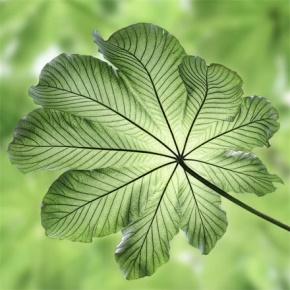 罗兰(靳佩芬)名言被青瓷花羽收藏到生活感悟