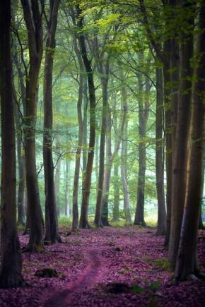村上春树名言被小天地收藏到人生经过的风景