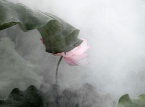 琼瑶(陈喆)名言被家乐福海盗收藏到追小说