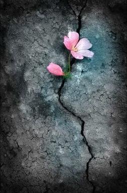 简媜(简敏媜)名言被两个月亮收藏到美丽人生